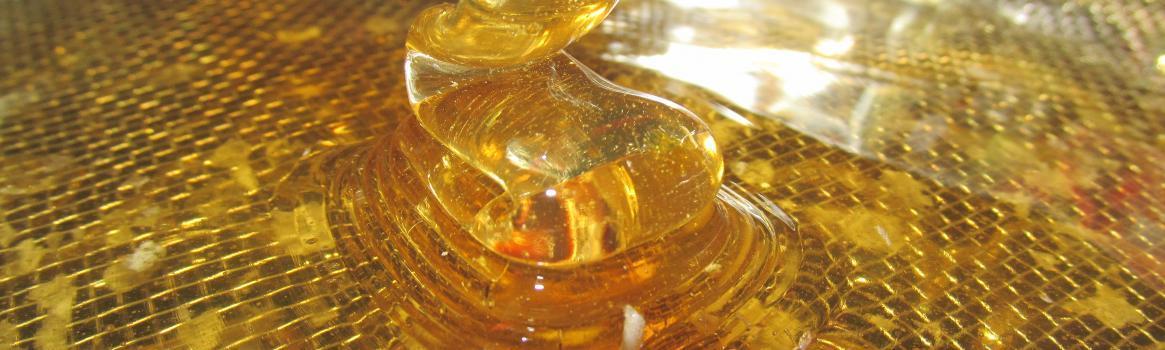 Stáčanie medu - voňavá práca